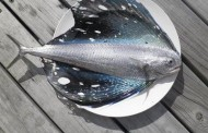 Strano pesce pescato a largo della nuova Zelanda