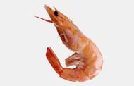 Gambero – Esche per pesca in mare