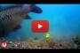 Videocamera per vedere le abboccate – Video Carpfishing