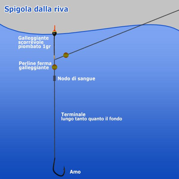 Spigola dalla riva - Pesca in mare
