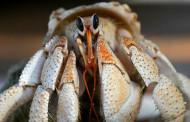 Paguro – Esche per pesca in mare