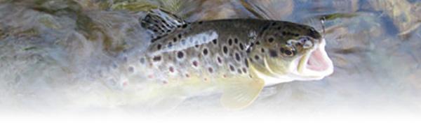 Pesca Sportiva Tab