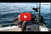 Un aquila in mare – Video