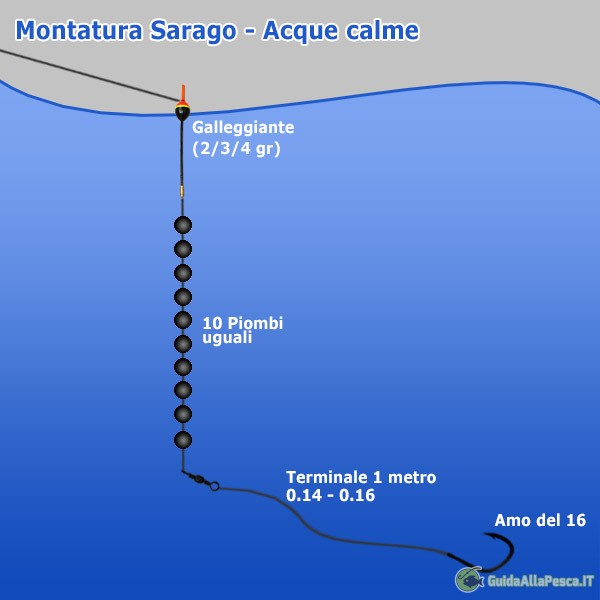 Sarago acque calme - Montatura mare