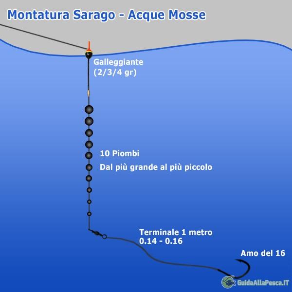 Sarago per acque mosse - Montature mare