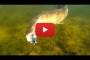 Il Luccio all'attacco – Video
