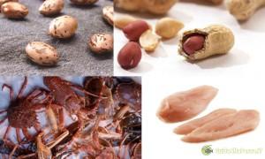 Alimenti con alto contenuti di aminoacidi