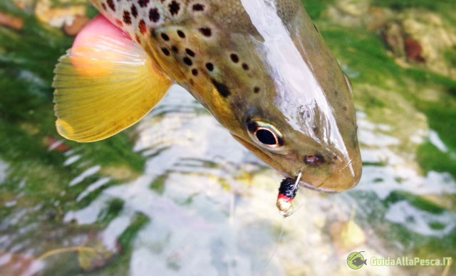 trota-pesca-ninfa-ferrata-abboccata-pesca
