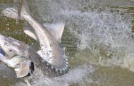 Pesca allo Storione – Attrezzatura