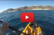 Squalo martello molto aggressivo attacca un Kayak