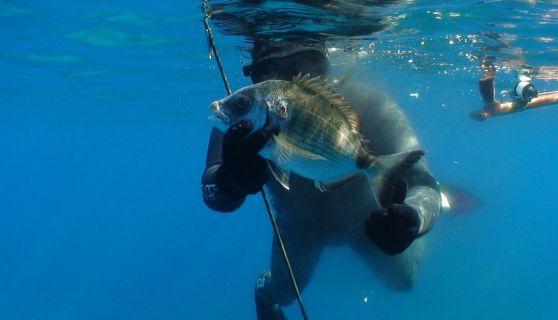Cattura - Pesca in apnea