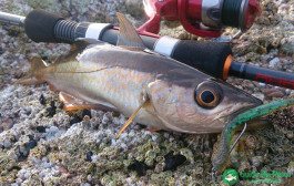 Light Rock Fishing – La tecnica