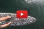 Video – Un compagno d'avventura inaspettato