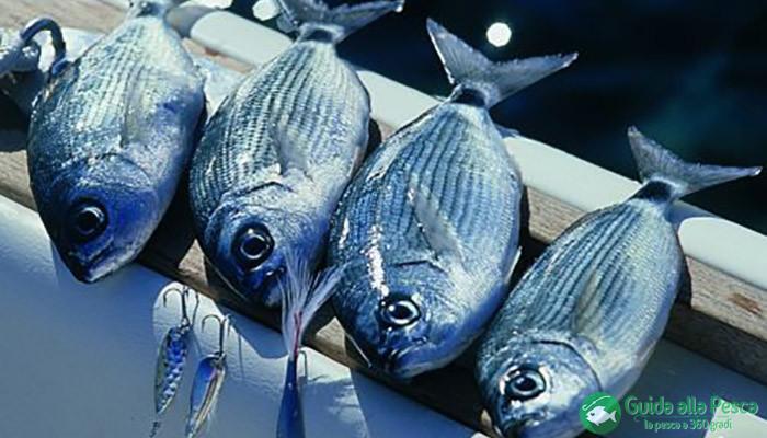 Obbligo di segnalazione attività di pesca in mare per il 2016