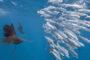 Misure minime pesci nella pesca in mare